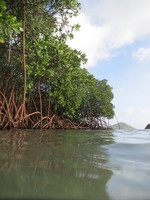 Sea-level rise threatens over 60% of Indo-Pacific coastal wetlands