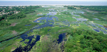 Global wetland loss