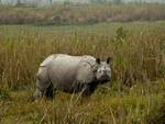 India's militant rhino protectors are challenging traditional views of how conservation works