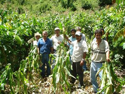 Agroforestry and sustainability in the humid tropics